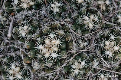 Thorns_D8F0252