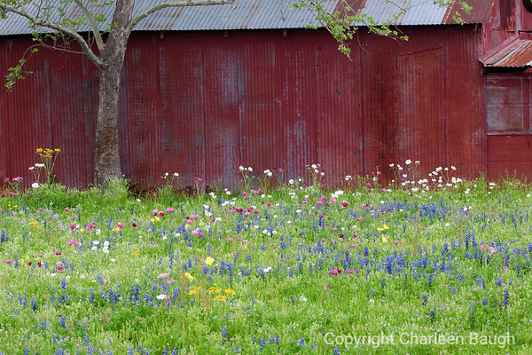 Red Barn & Wildflowers MG5401-3302015
