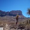 Cactus triangle