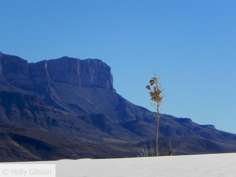 Lone yucca and peak