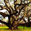 Big Tree, Goose Island Texas #1`