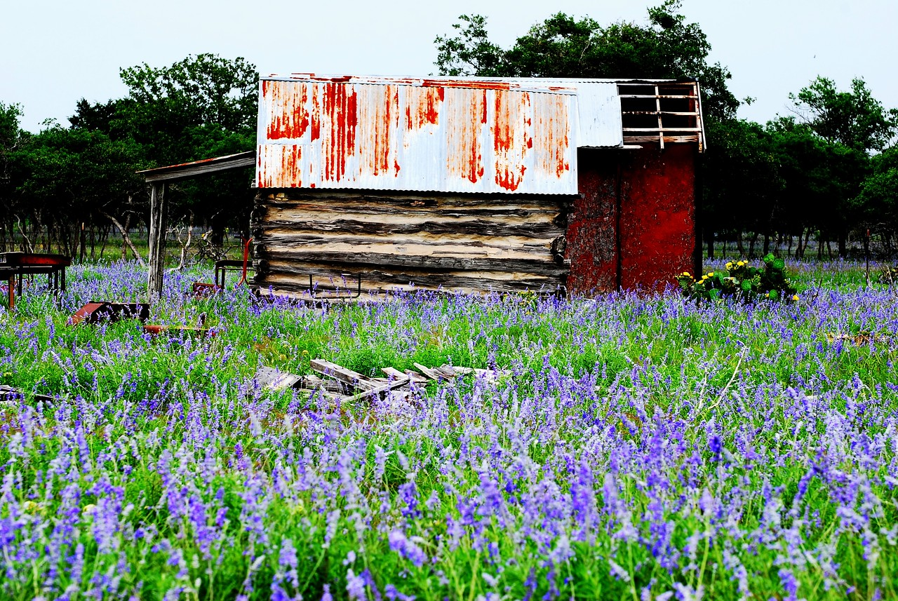 Shed on Blue Sage