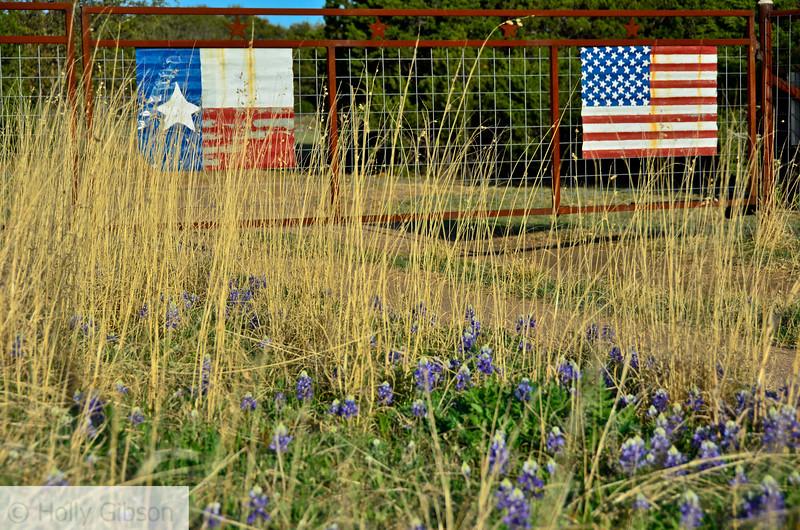 Flags and blue bonnets north of Fredricksburg, Texas