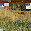 Flags and blue bonnets north of Fredricksburg, Texas
