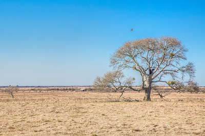 Plains of Waller, Texas