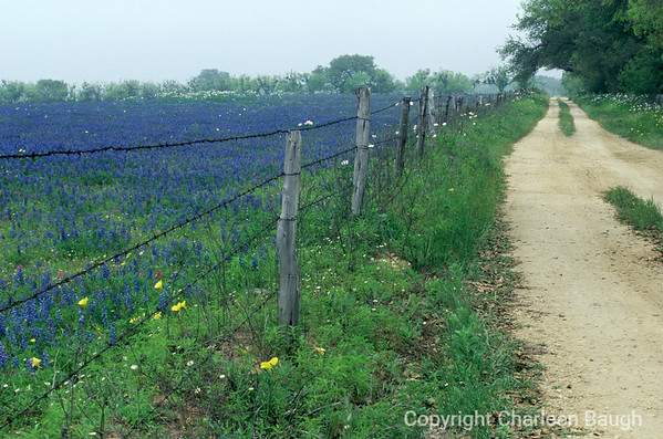 Road And Bluebonnets-SL1-0003