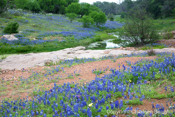 Pond And Bluebonnets MG9219-41615