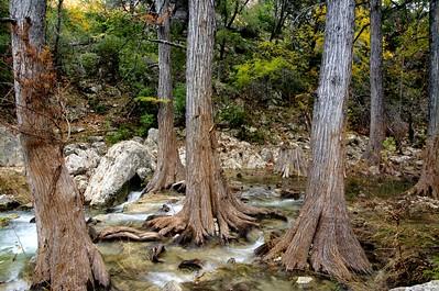 Trees in Hamilton Creek
