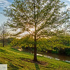 Wichita Falls - Lucy Park