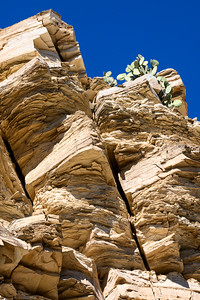 Cactus on High