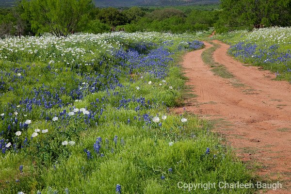 Road Through Bluebonnets MG0003-4512