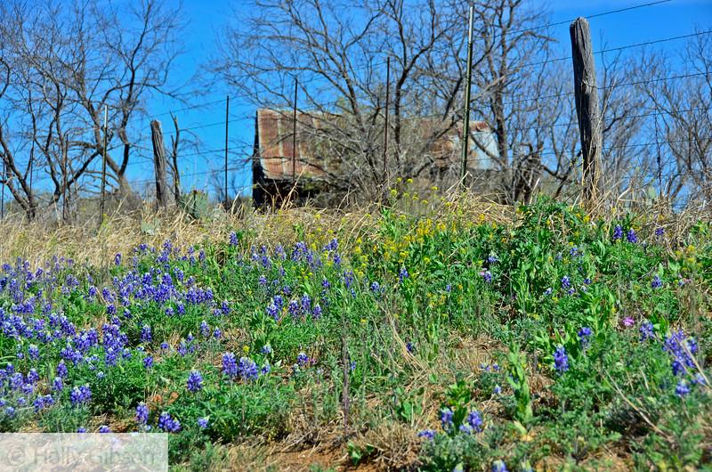 Old shed northwest of Mason, Texas