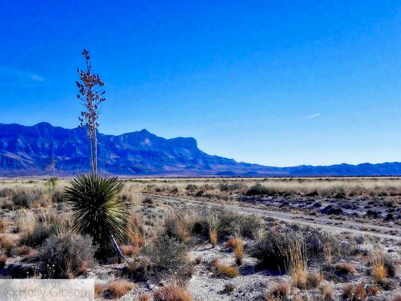 Yucca and Guadalupe Peak