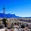 Yucca and Guadalupe Peak