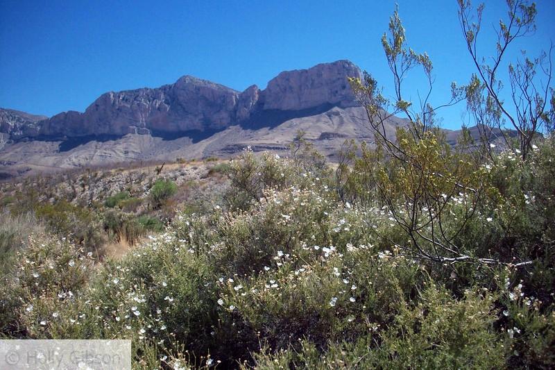 Peak with white flowers
