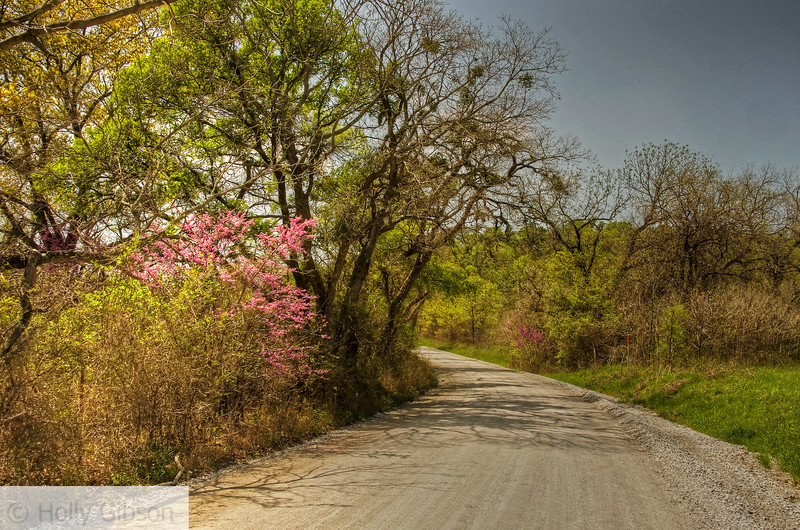 Back road in Texas hill country