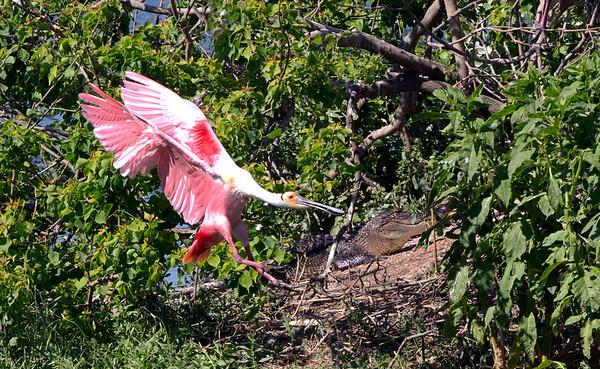 Texas Gulf Coast - Wildlife Refuges