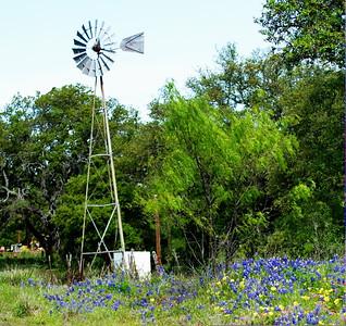 Texas_Windmill_Bluebonnets_D71_4410