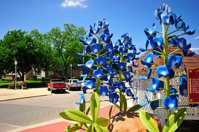 Bluebonnets Across the Street