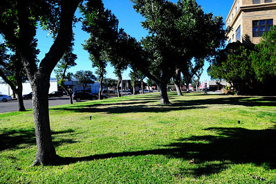 Winkler County Courthouse Square Pecan Trees