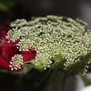 FLOWER GARNISH