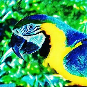 """Papagallo"" - Abilene Zoo - Abilene, Texas"