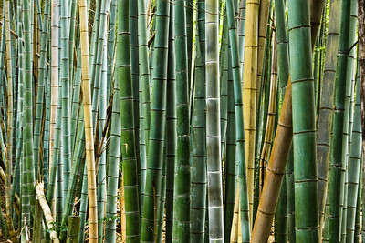 Bamboo Glowsticks