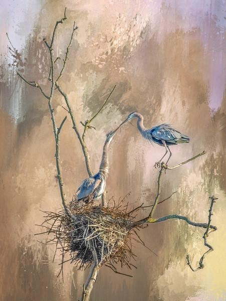 Nest Preparation