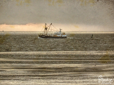 crab cutter on its way home