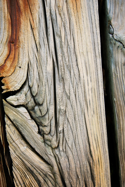 Corroded Wood