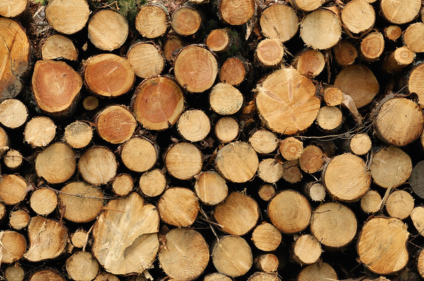 600-03587137 © Jean-Christophe Riou Model Release: No Property Release: No Wood Pile