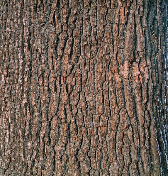 Oak Tree Trunk --- Image by © Volkmar Brockhaus/Corbis
