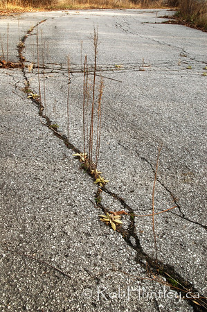 Crack in the road. An old, seldom used, laneway to a service building near the Ottawa River Parkway in Ottawa, Ontario.  © Rob Huntley