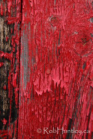 Black stains on shed siding board with flaking red paint. © Rob Huntley