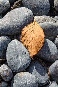 Beach Stones and a Leaf
