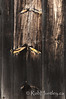 Barnboard Textures.<br /> <br /> Detail textures of wood on a barn door.<br /> <br /> © Rob Huntley