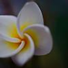 flower swirl