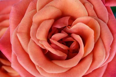 macroMore_flowerFun_09