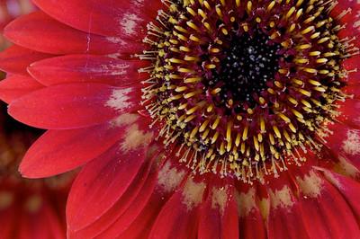 macroMore_flowerFun_12