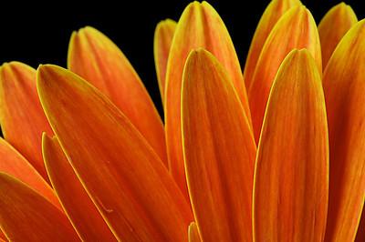 907_orange3