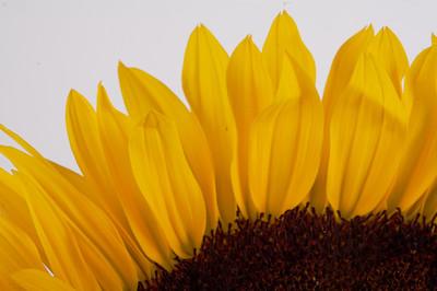 macroMore_flowerFun_14