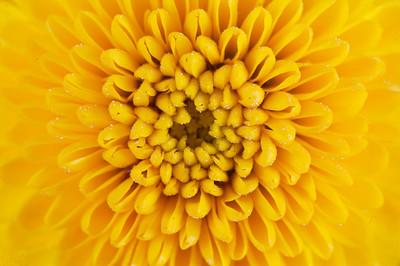 macroMore_flowerFun_07