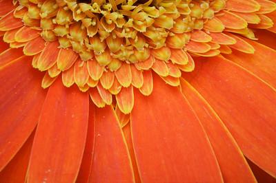 907_orange4