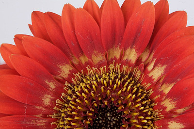 macroMore_flowerFun_11