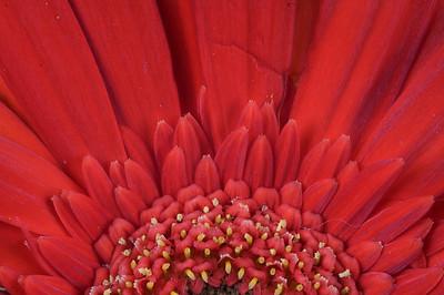 macroMore_flowerFun_29