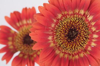macroMore_flowerFun_10