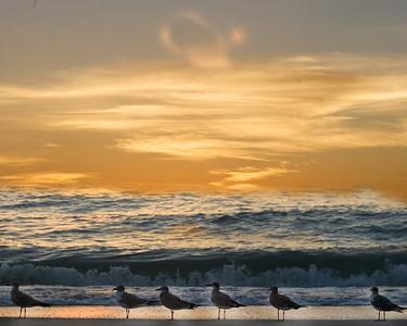 Gulls watch sunset at Blind Pass.