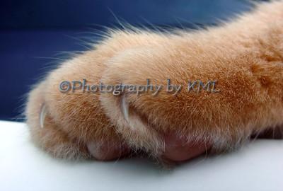 Furry Paw