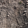 Pattern of soil texture or background