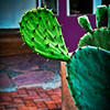 Old Town Prickly Pear